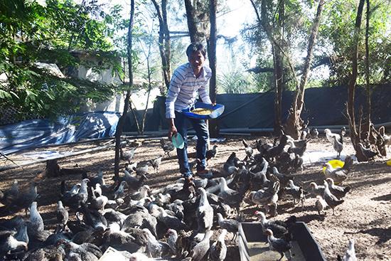 Anh Nhi bên trang trại nuôi gà trên đất cát của mình. Ảnh: THẮNG DƯƠNG