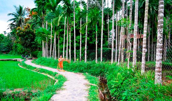 Đường làng Lộc Yên.
