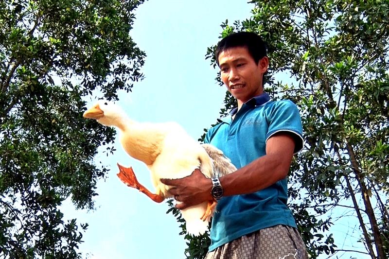Mô hình khởi nghiệp vịt lấy trứng đã giúp thanh niên Nguyễn Trọng Sang có thể làm giàu trên đất quê hương. Ảnh: Đ. ĐẠO