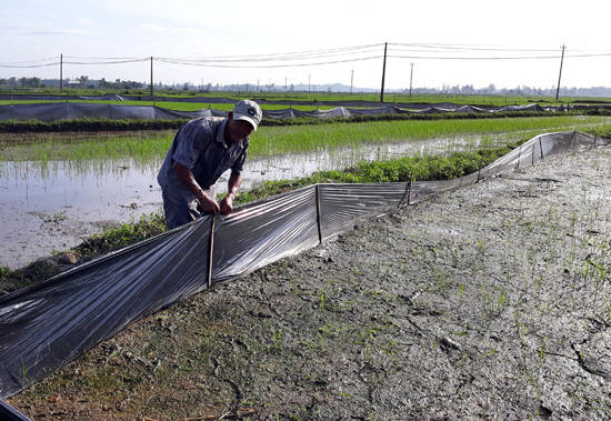 Ông Võ Văn Quang đang rào chắn bao ni lông xung quanh để ngăn chuột cắn phá. Ảnh: Giang Biên