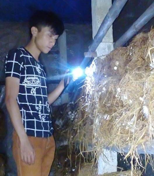 Huỳnh Tuấn Vũ kiểm tra sự phát triển của nấm. Ảnh H.H