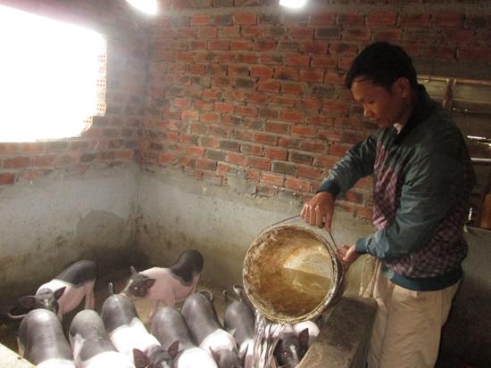 Giá vật nuôi giảm nên người chăn nuôi không còn mặn mà với việc chăm sóc đàn gia súc. Ảnh: T.S