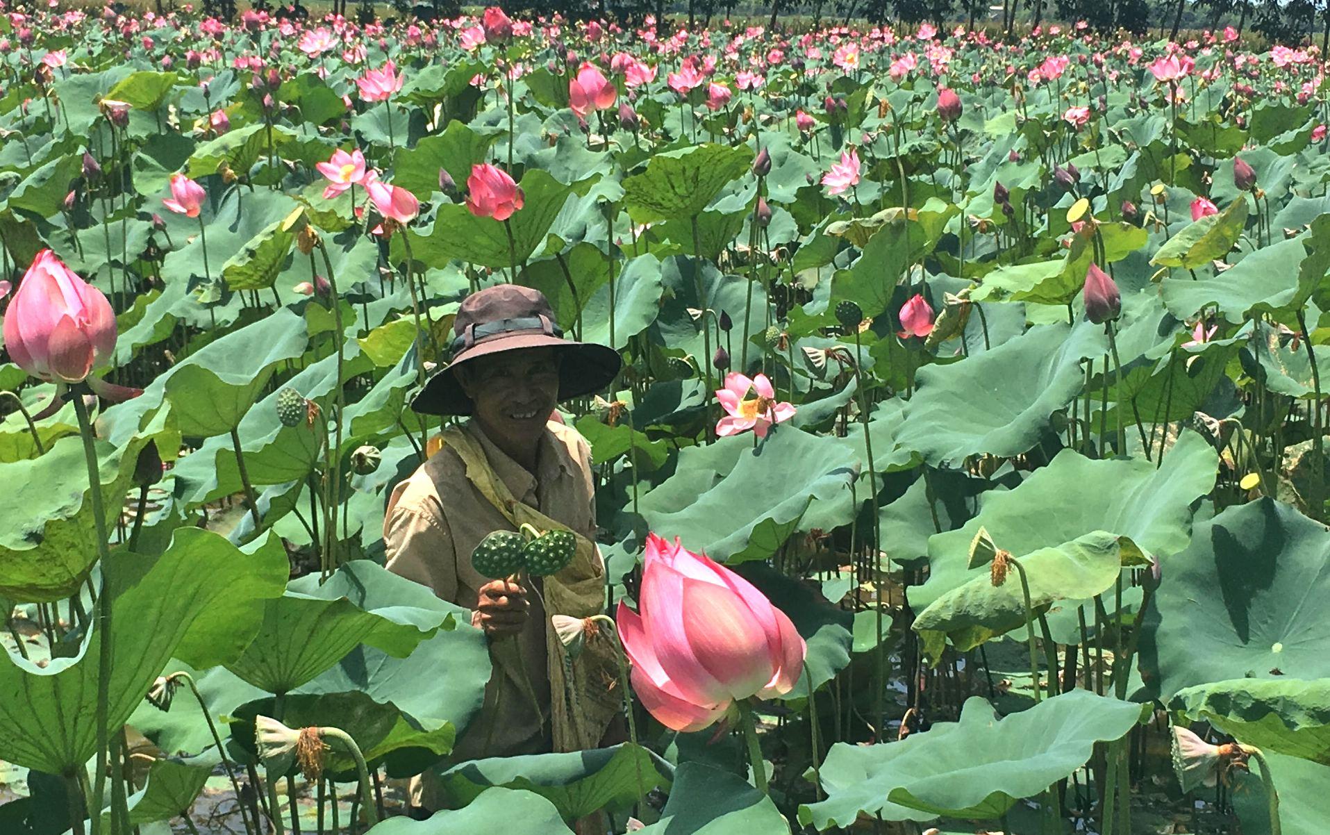 Ông Minh là điển hình của việc vào vùng đất cói khai phá làm kinh tế. Ảnh: PHAN VINH