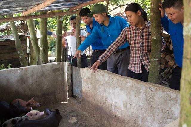 Chi đoàn cơ quan Tỉnh đoàn trao tặng 4 con heo giống làm phương tiện sinh kế giúp gia đình anh Bríu Nát. Ảnh: L.Đ