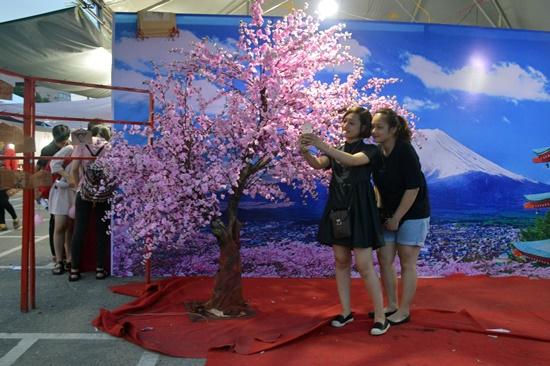Hoa anh đào, biểu tượng của đất nước Nhật Bản được nhiều bạn trẻ thích thú chụp ảnh lưu niệm