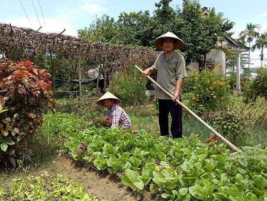 Vợ chồng ông Hiền trên vườn rau hữu cơ của mình.Ảnh: V.LỘC
