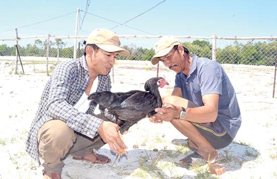 Anh Nguyễn Trung Phương (trái) cho biết, HTX Nông nghiệp Tứ Sơn Life đang cần thêm nguồn vốn để mở rộng mô hình chăn nuôi.Ảnh: Q.V