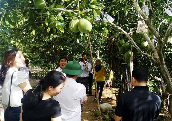 Khu vườn trái cây của gia đình ông Nguyễn Đình Sưu thu hút người đến tham quan mỗi khi ghé thăm làng cổ Lộc Yên.