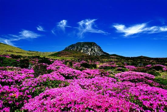 Nhiều cảnh đẹp trên đảo Jeju thu hút du khách khắp nơi đến tham quan