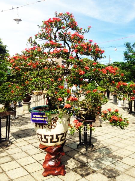 Liên hoan thu hút nhiều loại hoa cảnh, bonsai độc đáo khắp khu vực tham gia. Ảnh: MINH HẢI