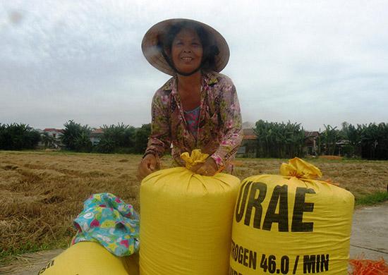 """Nông dân xã Quế Xuân 2 (Quế Sơn) tập trung thu hoạch lúa theo phương thức """"cuốn chiếu"""". Ảnh: NHÃ PHƯƠNG"""