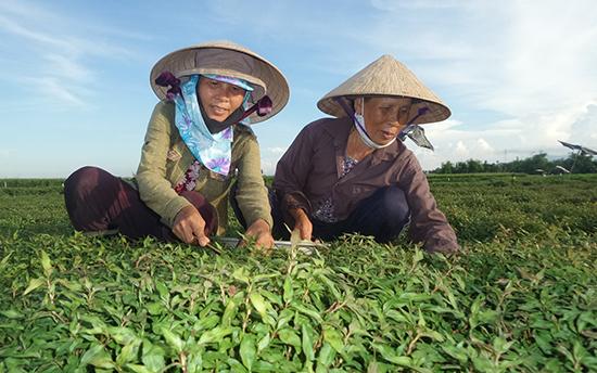 Bà Đặng Thị Tặng (trái) và bà Võ Thị Lành có thâm niên trồng rau răm hơn 20 năm. Ảnh: N. Trang