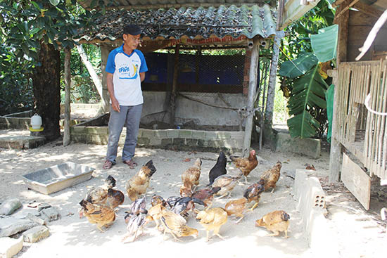 Tham gia tổ hợp tác chăn nuôi gà, các hộ phải áp dụng đúng quy trình chuẩn đề đảm bảo chất lượng gà thương phẩm. Ảnh: P.V