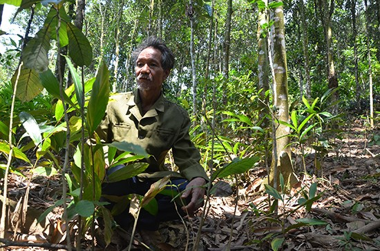 Mr. Ho Van Nhieu at his amomum garden in forest