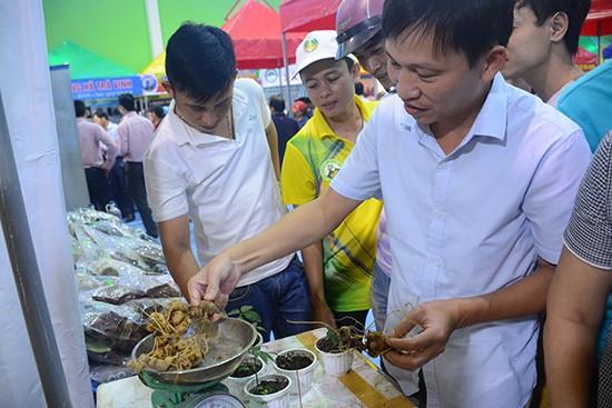 Ngoc Linh ginseng fair at Nam Tra My district, Quang Nam province.