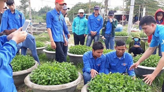 Tham quan một mô hình trồng hoa cúc tại xã Điện Hòa. Ảnh: HC