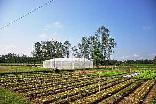 Xã Tam An đang quy hoạch vùng sản xuất rau chuyên canh tại cánh đồng Gò Sen (thôn An Hòa) với diện tích khoảng 2ha. Ảnh: VINH ANH