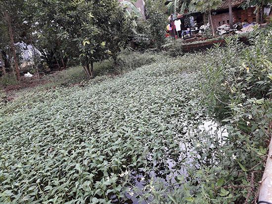 """Rau muống trồng nơi thấp trũng, nước nhiễm bẩn được gắn mác """"của nhà làm"""" khi đem bán. Ảnh: AN DÂN"""
