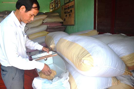 Hợp tác xã Nông nghiệp Bình Đào thu mua lúa giống của nông dân. Ảnh: N.Q.V