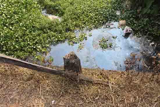 Dưới cầu rác, xác súc vật, cảnh quan nhếch nhác, gây ô nhiễm môi trường nghiêm trọng... Ảnh: T.N