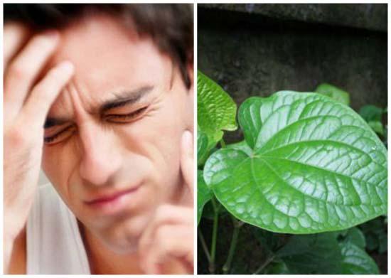 Súc miệng bằng nước trầu không giúp triệu chứng đau nhức giảm đáng kể (Ảnh: Internet)
