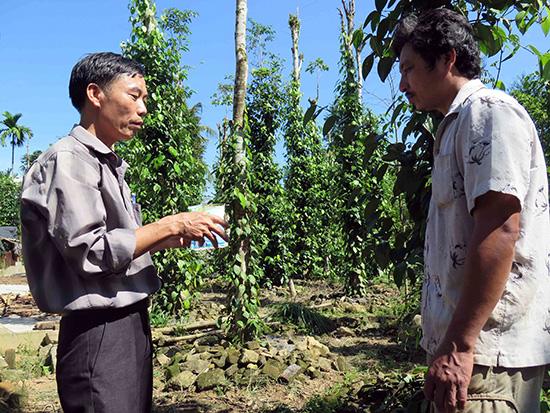 Cán bộ Phòng NN&PTNT huyện Tiên Phước hướng dẫn bà con sử dụng thuốc để phun, ngăn ngừa dịch bệnh trên cây tiêu.