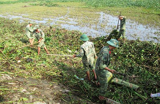 Bộ đội hỗ trợ nông dân vùng đông Quế Sơn thu dọn bèo rác phủ trên mặt ruộng. Ảnh: N.P