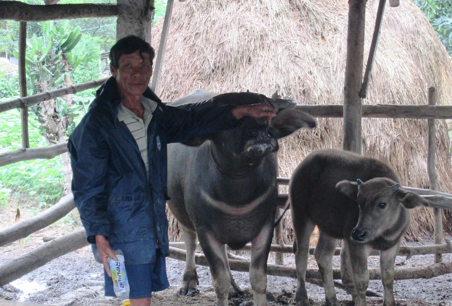 Khi phát hiện gia súc có dấu hiệu mắc bệnh LMLM, người chăn nuôi phải báo ngay cho chính quyền cơ sở và cơ quan thú y.