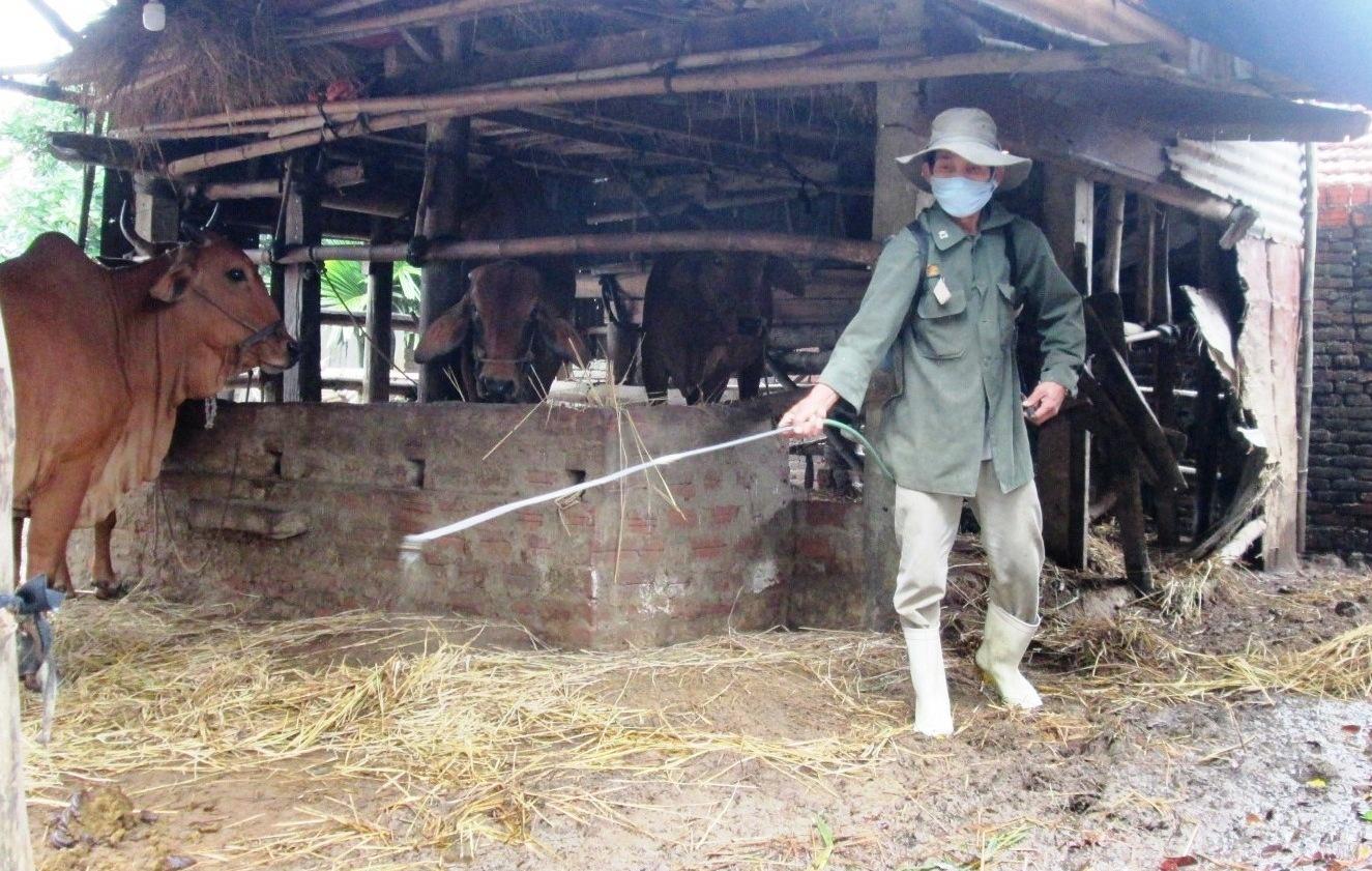 Người dân xã Duy Trinh (Duy Xuyên) đang tập trung phun tiêu độc khử trùng chuồng trại nhằm ngăn chặn mầm bệnh phát tán.       Ảnh: VĂN SỰ