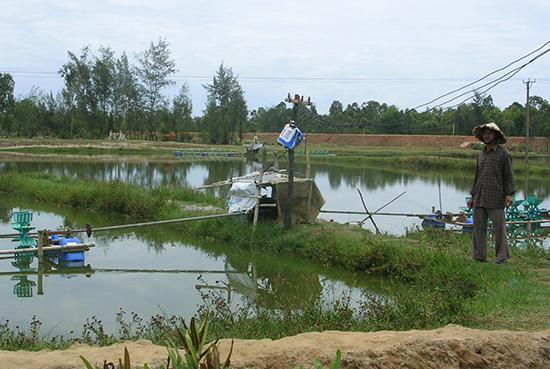 Nuôi trồng thủy sản mang lại thu nhập cao cho nông dân Tam Kỳ. Ảnh: A.SẮC
