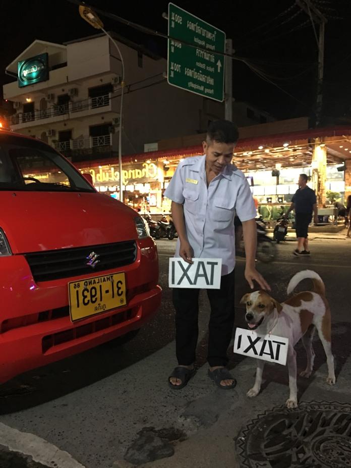 Dịch vụ taxi ở Phuket rất chi là dễ thương với hình ảnh chú chó đeo bảng Taxi chào khách. Hình ảnh này khiến bạn sẽ nhớ phố cổ Hội An với những chú chó thân thiện luôn gần gũi với du khách.