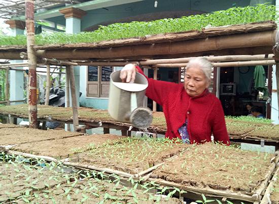 Bà Lương Thị Một tưới nước cho những vỉ ớt giống. Ảnh: THANH THẮNG
