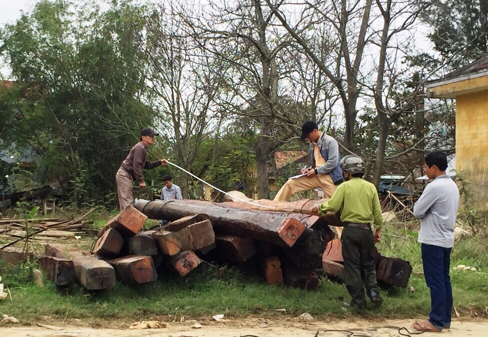 Tổ công tác trục vớt, kiểm đếm số gỗ tang vật Ảnh: T.C