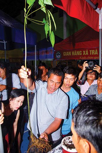 Khách hàng chọn mua sâm Ngọc Linh tại phiên chợ sâm ở Nam Trà My. Ảnh: PHƯƠNG THẢO