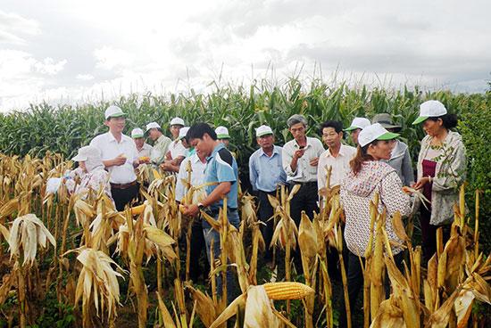 Việc hình thành trung tâm kỹ thuật nông nghiệp sẽ tăng số người trực tiếp thực hiện việc hỗ trợ nhà nông phát triển sản xuất và phòng chống dịch bệnh. Ảnh minh họa): HOÀI NHI