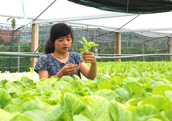 Mô hình trồng rau theo phương thức thủy canh mang lại hiệu quả kinh tế cao cho chị Sương.