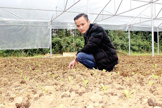 Nguyễn Đình Khánh đang kiểm tra những luống rau mới được cấy trong hệ thống nhà lưới. Ảnh: L.D