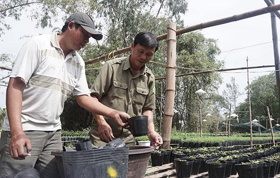 Anh Phan Ngọc Định (bên trái) và anh Trần Công Thức bón phân cho các chậu cây con. Ảnh: NHƯ TRANG