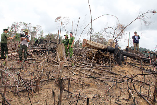 Vụ việc phá rừng gây bức xúc trong dư luận tại xã Tiên Lãnh (Tiên Phước) đã được chỉ đạo kiểm tra, làm rõ và xử lý nghiêm.