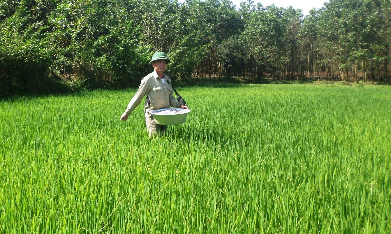 Diệt chuột nhưng hạn chế tối đa việc dùng thuốc hóa học mà nên dùng biện pháp dân gian và thuốc sinh học để bảo vệ môi trường và cây lúa. Ảnh: THÔNG VINH