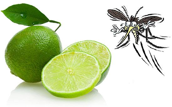 Chanh có tác dụng xua đuổi côn trùng, đặc biệt là muỗi rất hiệu quả - Ảnh minh họa: Internet