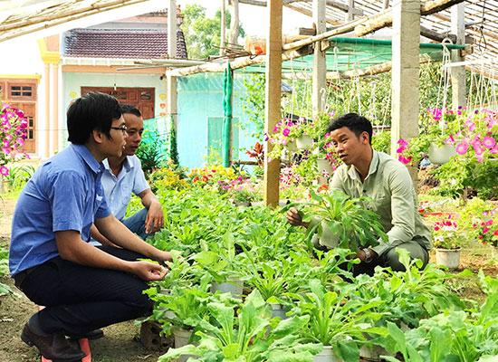 Mô hình khởi nghiệp từ trồng hoa của thanh niên Thăng Bình. Ảnh: VINH ANH