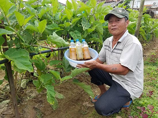 Nông dân ở làng rau Thanh Đông (xã Cẩm Thanh) chỉ sử dụng chế phẩm sinh học và thảo mộc trừ côn trùng gây hại. Ảnh: Q.T