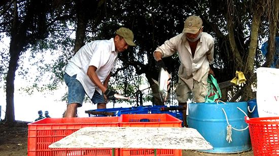 Ao nuôi cá nước ngọt của ông Thưởng cho thu nhập 500.000 triệu mỗi năm. Ảnh: HỒ QUÂN.