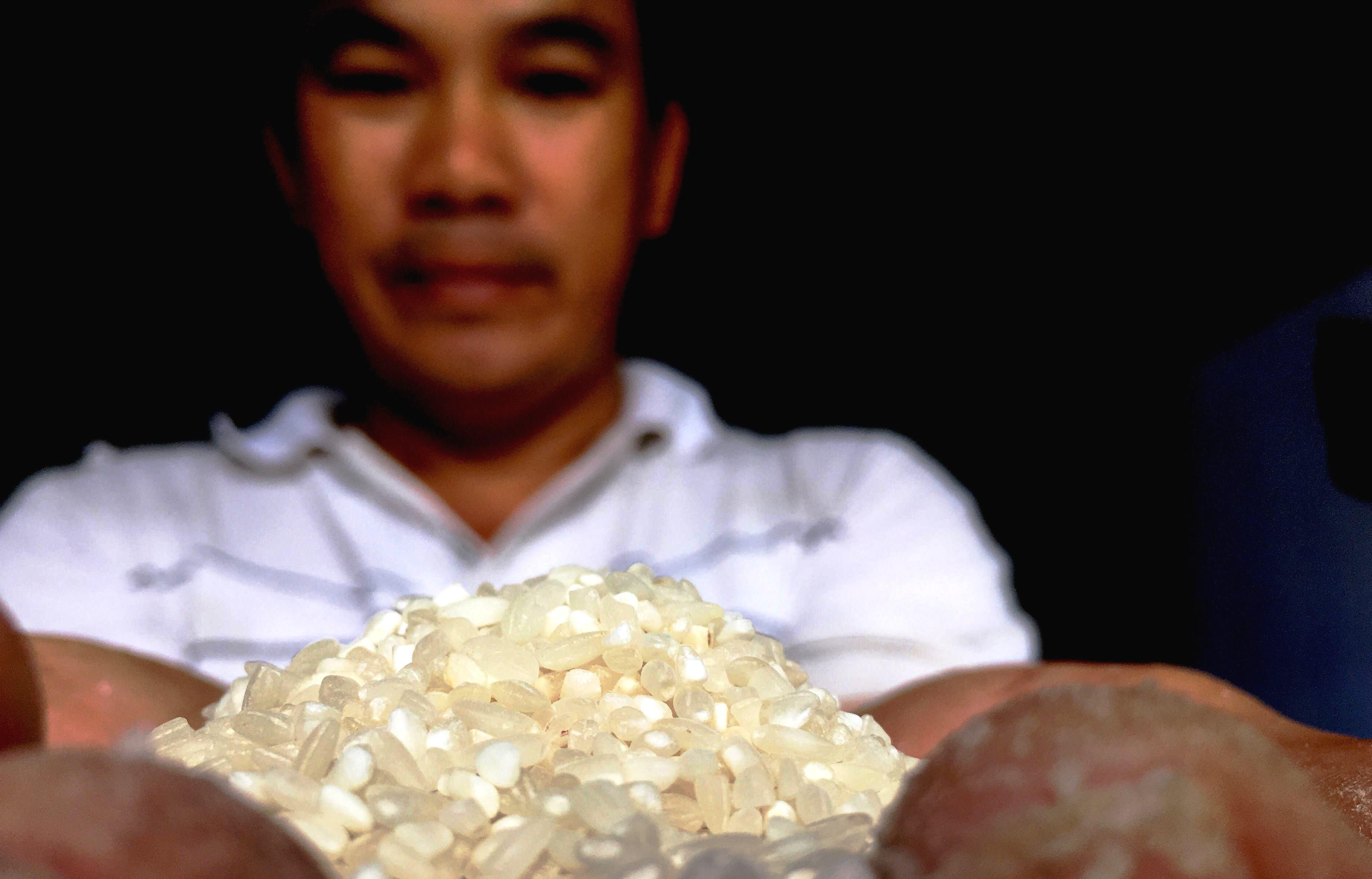 Ông Chức cho rằng gạo từ giống IR13/2 ở Kế Xuyên phù hơp làm nguyên liệu tráng mỳ. Ảnh: PHAN VINH