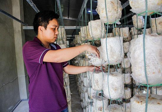 Mô hình trồng nấm mỗi tháng đem lại cho anh Dũng hơn 15 triệu đồng.