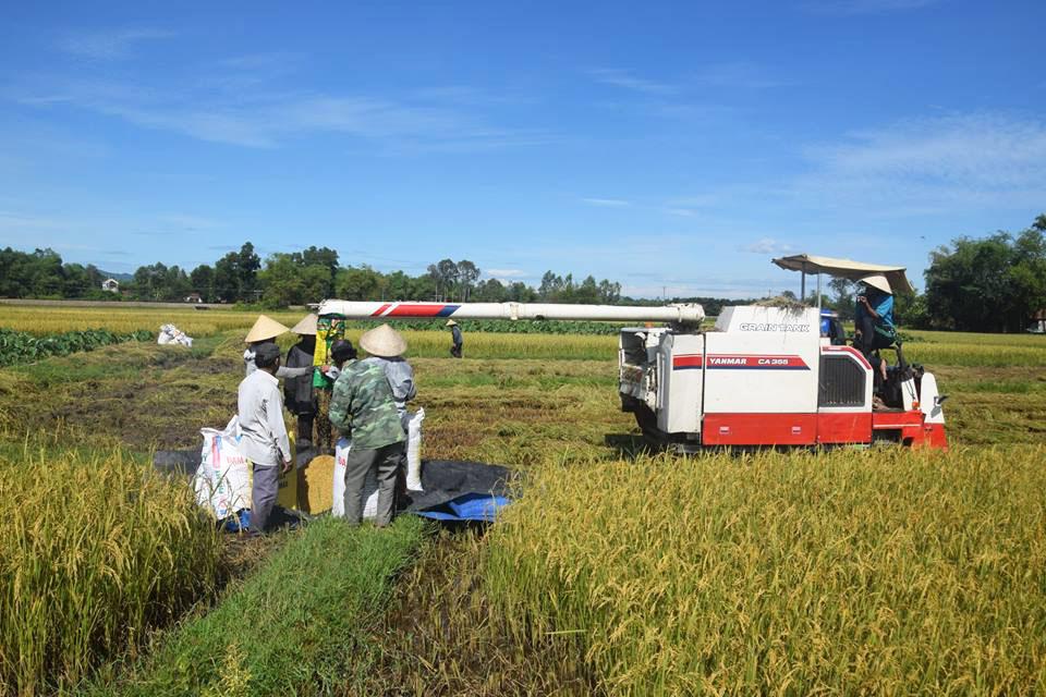 Nông dân Phú Ninh vui mừng vì trúng lớn vụ lúa đông xuân năm 2017 - 2018. Ảnh: THANH THẮNG
