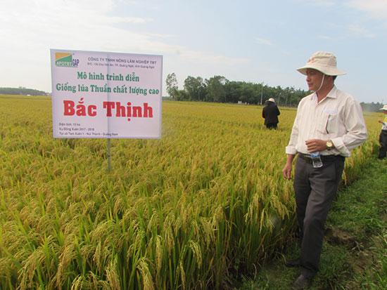 Hợp tác xã Phú Đông (xã Tam Xuân 1) liên kết sản xuất lúa giống vụ đông xuân 2017-2018. Ảnh: Văn Phin