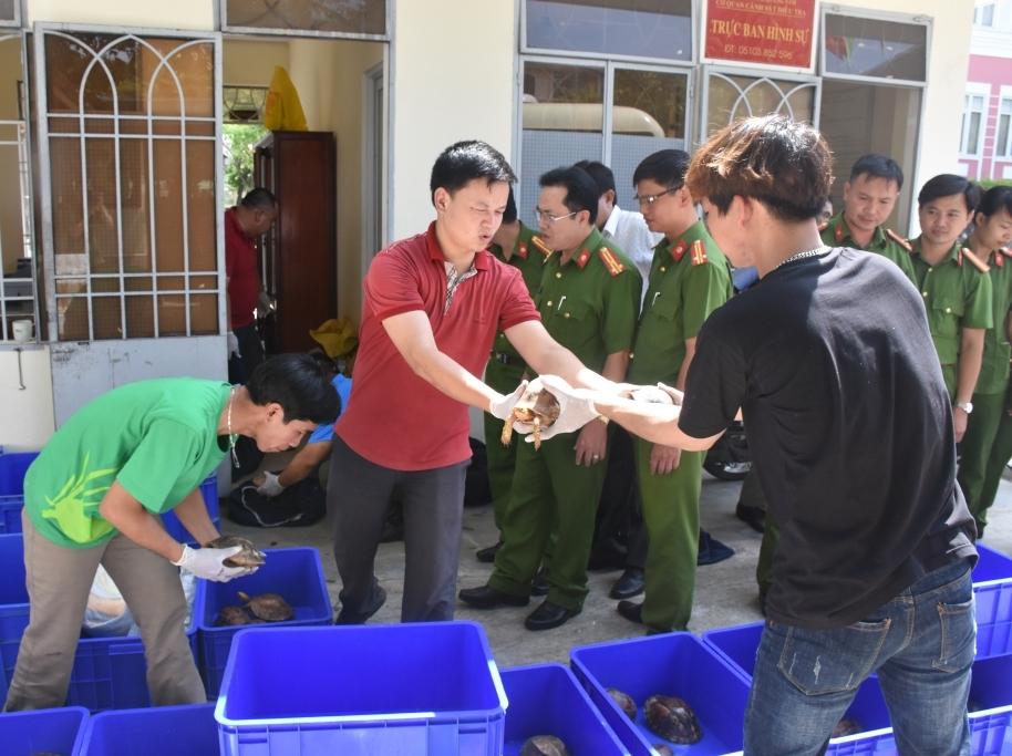 Bàn giao cá thể rùa cho Trung tâm cứu hộ động vật hoang dã vườn quốc gia Cúc Phương