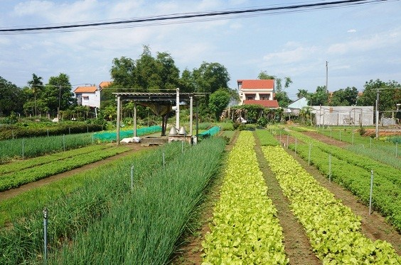 Tra Que vegetable village, 3 km from Hoi An centre, is well-known for agritourism activities.